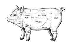 Corte tirado mão do porco ilustração royalty free