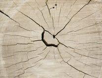Corte transversal de un tronco de árbol Foto de archivo libre de regalías