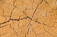 Corte transversal del árbol Foto de archivo