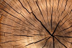 Corte transversal del árbol Foto de archivo libre de regalías