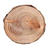 Corte transversal del alerce del tronco de árbol que muestra los anillos aislados en el fondo blanco imagen de archivo