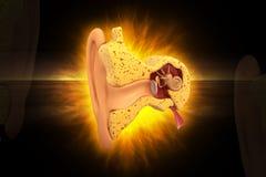 Corte transversal del oído Foto de archivo