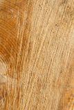 Corte transversal del tronco de árbol Imagen de archivo