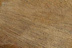 Corte transversal del tronco de árbol, Foto de archivo