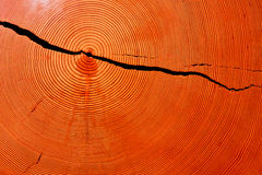 Corte transversal del tronco de árbol Imágenes de archivo libres de regalías