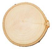 Corte transversal del tronco de árbol de abedul aislado Foto de archivo libre de regalías
