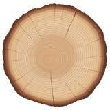 Corte transversal del tronco de árbol de los anillos anuales Imagen de archivo