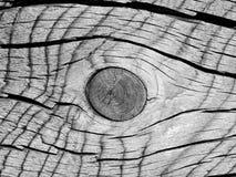 Corte transversal y el nudo del árbol viejo como textura de madera interesante - blanco y negro fotos de archivo