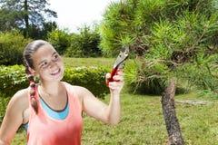 Corte y poda de la mujer joven el árbol de pino de los bonsais Fotografía de archivo libre de regalías