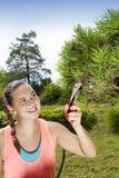 Corte y poda de la mujer joven el árbol de pino de los bonsais Imagen de archivo