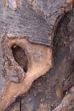 Corteccia Immagini Stock
