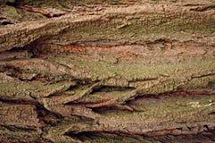 Corteccia Fotografie Stock