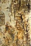 Corteccia Brown Immagini Stock