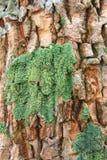 Corteccia coperta di muschio Immagini Stock