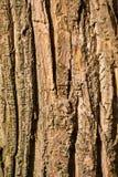 corteccia da un albero della foglia Immagine Stock
