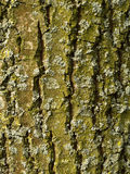 corteccia da un albero della foglia Immagini Stock Libere da Diritti
