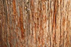 Corteccia del cedro Immagini Stock