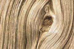 Corteccia del Cypress fotografie stock libere da diritti