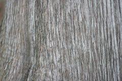 Corteccia del Cypress Fotografia Stock
