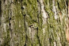 Corteccia del fondo dell'albero Immagine Stock Libera da Diritti
