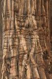 Corteccia del ginepro Fotografia Stock