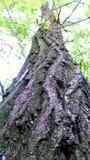 Corteccia del legno Immagine Stock