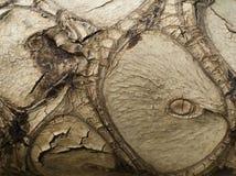 Corteccia del Philodendron Fotografie Stock