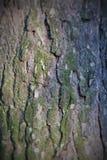 Corteccia del pino marrone del fondo Immagini Stock Libere da Diritti