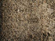 Corteccia del primo piano dell'albero di populus Immagini Stock