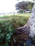 Corteccia dell'albero Immagine Stock