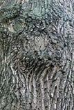 Corteccia dell'albero Fotografia Stock Libera da Diritti