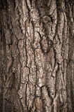 Corteccia dell'albero di quercia Fotografie Stock