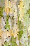 Corteccia dell'albero piano fotografie stock