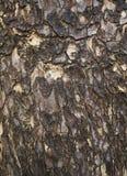 Corteccia dell'albero piano Immagini Stock Libere da Diritti