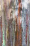 Corteccia dell'eucalyptus Fotografie Stock