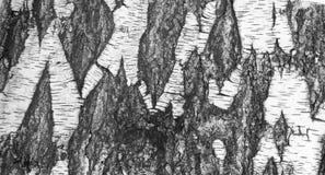Corteccia della betulla Immagini Stock Libere da Diritti