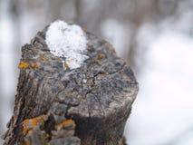 Corteccia della bufera di neve fotografia stock