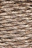 Corteccia della palma Immagine Stock