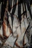 Corteccia della palma con l'ombra della foglia fotografie stock
