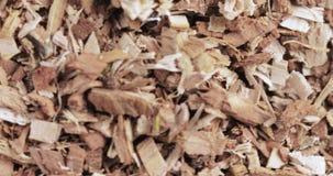 Corteccia della quercia sciolta sulla tavola archivi video