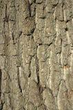 Corteccia di albero Immagini Stock