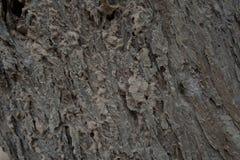 Corteccia di albero Immagine Stock Libera da Diritti