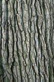 Corteccia di albero. Immagine Stock