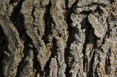 Corteccia di albero Fotografie Stock