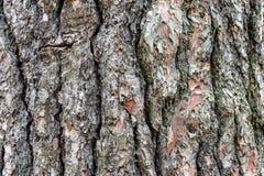 Corteccia di albero 6 Fotografia Stock Libera da Diritti