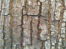 Corteccia di albero Immagini Stock Libere da Diritti