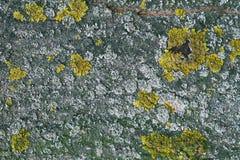 Corteccia di albero astratta con il modello del muschio Immagini Stock