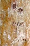 Corteccia di albero Backgrond con il nome Fotografia Stock
