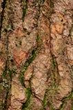 Corteccia di albero con muschio Immagini Stock
