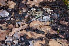 Corteccia di albero decomposta - 2 immagini stock libere da diritti